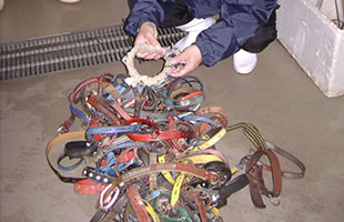 Collars of the dogs that were put down