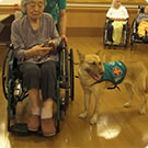 Working as a therapy dog