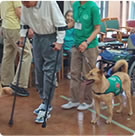 Accompanying a person with walking difficulties during his rehabilitation.