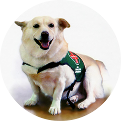 About Therapy Dogs