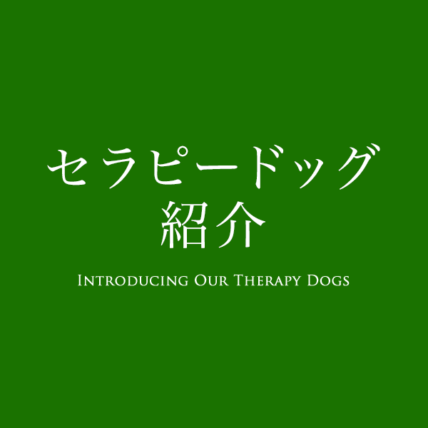 Introducing Our Therapy Dogs