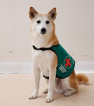 Peace, the leader dog