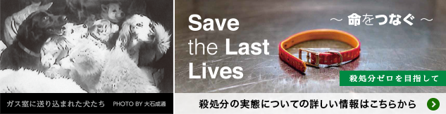 save the last lives