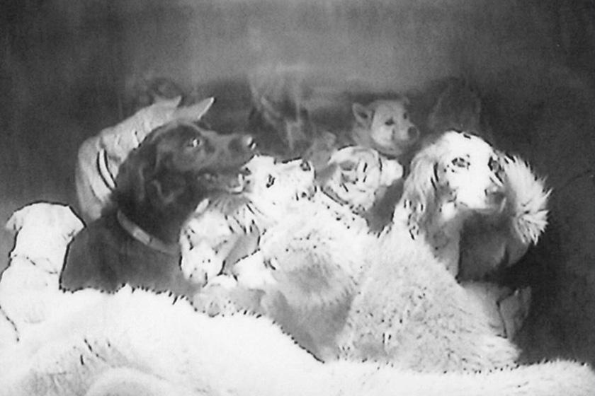 ガス室に送り込まれ殺処分される犬達
