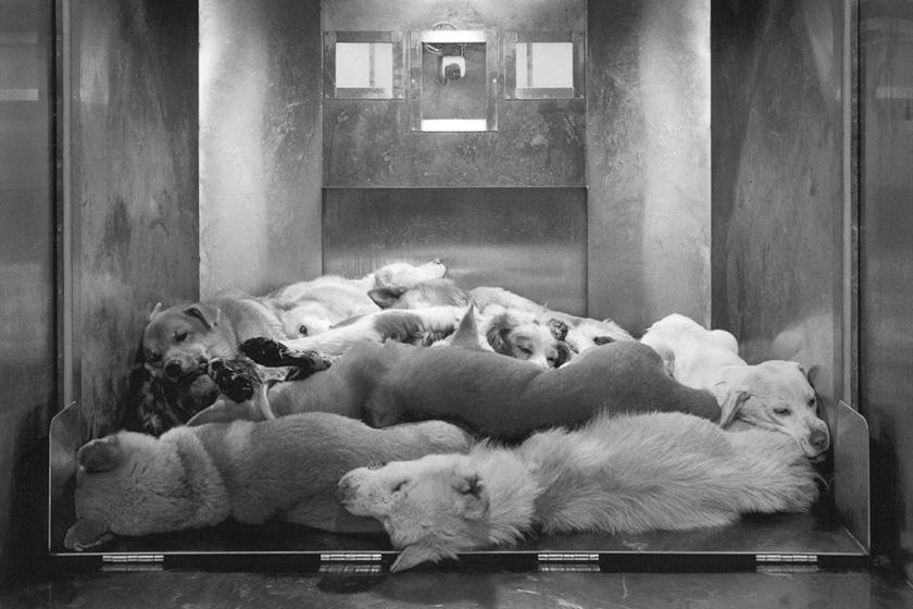 ガス室で殺処分された犬達